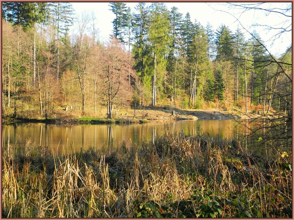Winter am Ebnisee