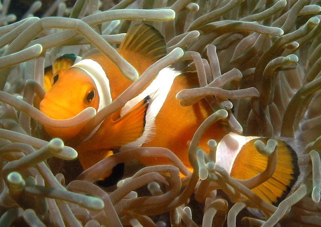 scuba diving tioman
