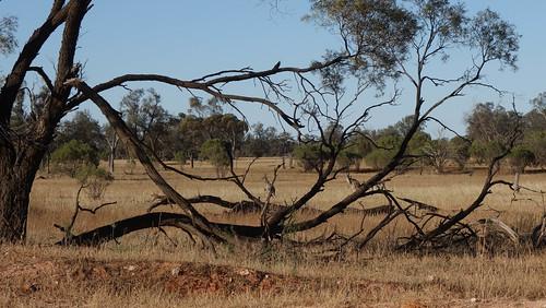 2015-11-14-17-26-06_Outback-0066.jpg