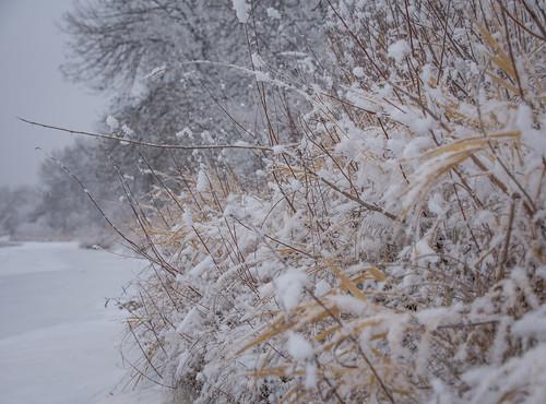 frosty riverbank