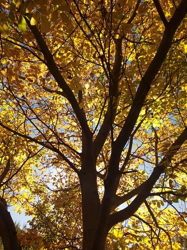 El otoño llega a Anento/La tardor arriba a Anento Pd: El gps llama erroneamente el lugar. Es el paraje del Aguallueve