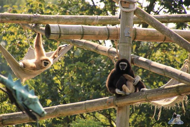 Tierpark Berlin 16.08.2015  0163