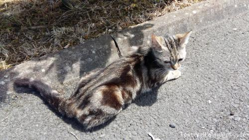 Sat, Aug 15th, 2015 Lost Female Cat - The Local Area, Balinalee, Longford