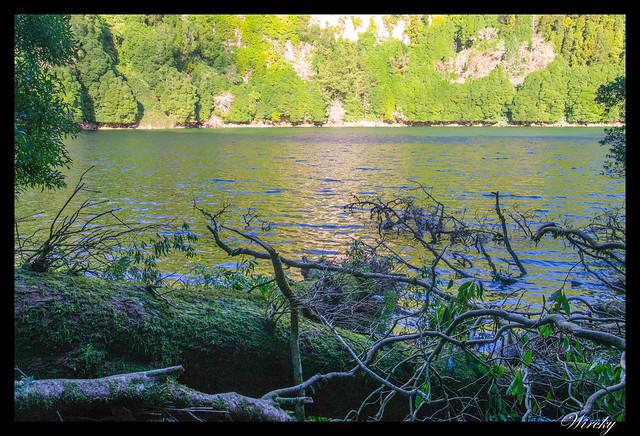 Troncos de madera y ramas en el lago do Congro