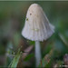 Mushroom by James0806