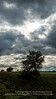 Tree against cloudy sky A