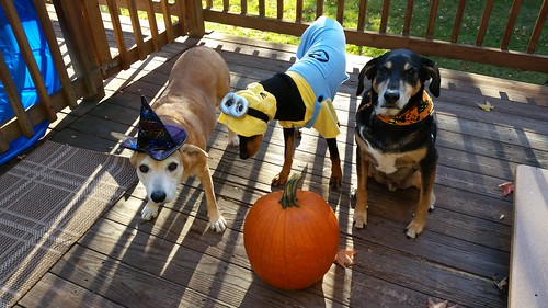 dogs dressed up for halloween Lapdog Creations