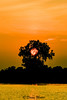 Sunset Silhouette by Donnymoorephotography