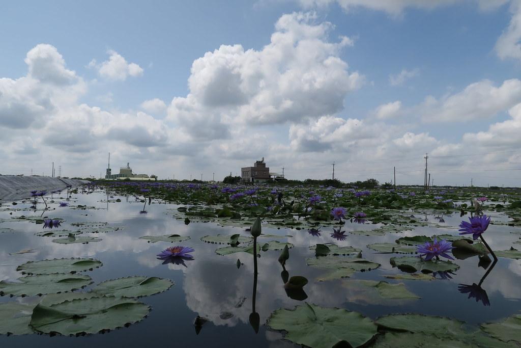 台南市白河區蓮緣香水蓮花園 (49)