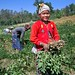 'Mro' communities' women harvesting nuts