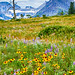 Wildflowers at Glacier - 3rd Place Flora - Al Perry