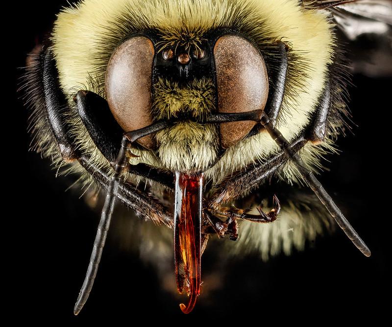 6-bumblebee-1600