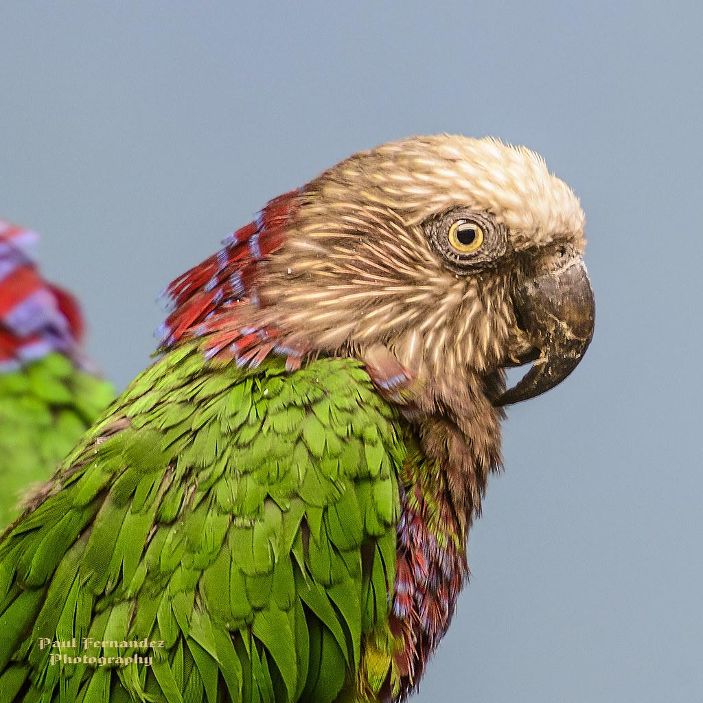 7 News Denver Zoo: Anacã » BrasilienPortal