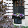 An autumn window box, West 9th Street, Greenwich Village, New York City
