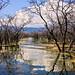 Lago Enriquillo, nuestros lugares paradísiacos!!