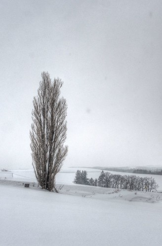 Hills and Trees at Biei on JAN 03, 2016 (4)