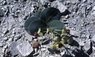 BLM Colorado Native Plant Materials Development Program