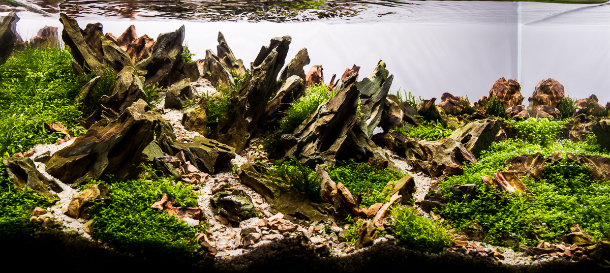 From this to this - Aquascape progression - Scape 4 added ...
