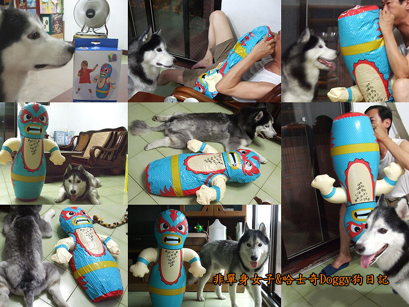 2012哈士奇doggy寵物玩具07不倒翁