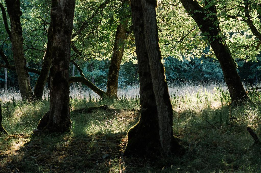 Dans l'Aube, chemins de Compostelle et via Francigena  - Carnet de voyage en France - La forêt des daims