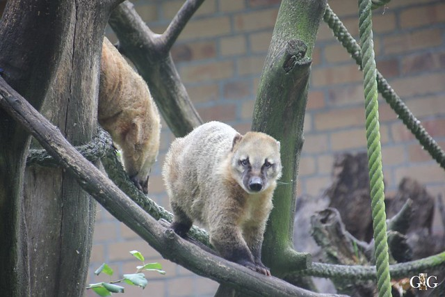 Zoo Rostock 19.09.201517
