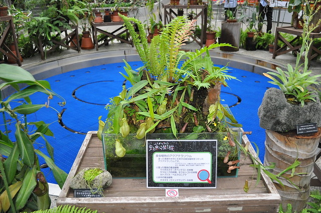 Nepenthes habitat study