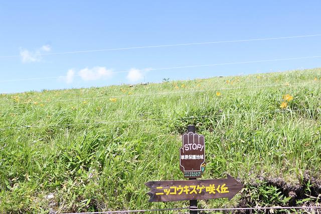 2014-07-26_00172_霧ヶ峰.jpg