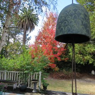 Fall, Petaluma