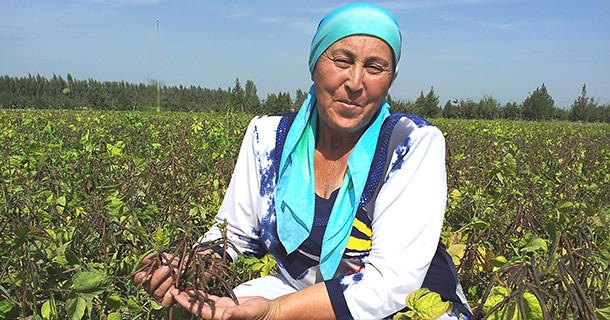Mung bean in Uzbekitan