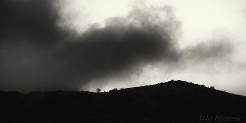 Albero e nuvola