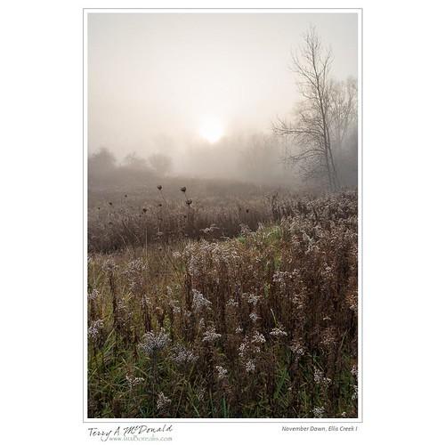 morning autumn mist ontario canada fall fog sunrise landscape dawn foggy timing nikond800e