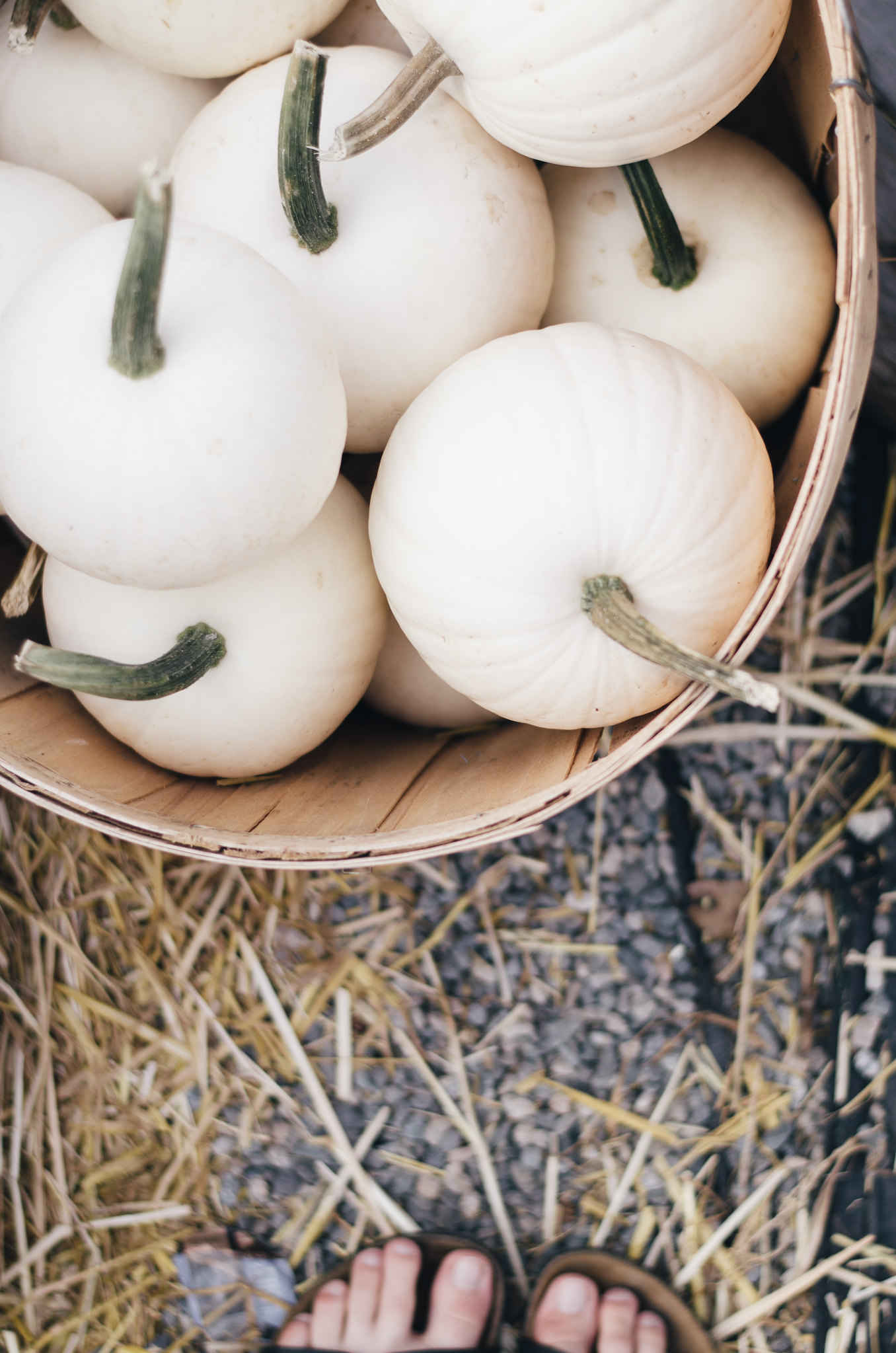 White Pumpkins and Birkenstocks on juliettelaura.blogspot.com
