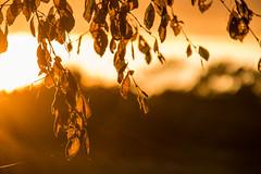 Sun lit