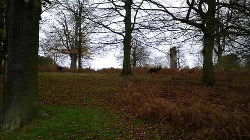 Deer among the trees