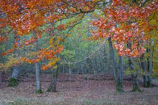 Forêt de Nançois le Grand - Meuse