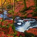 Autumn on the Touch Burn by john&mairi