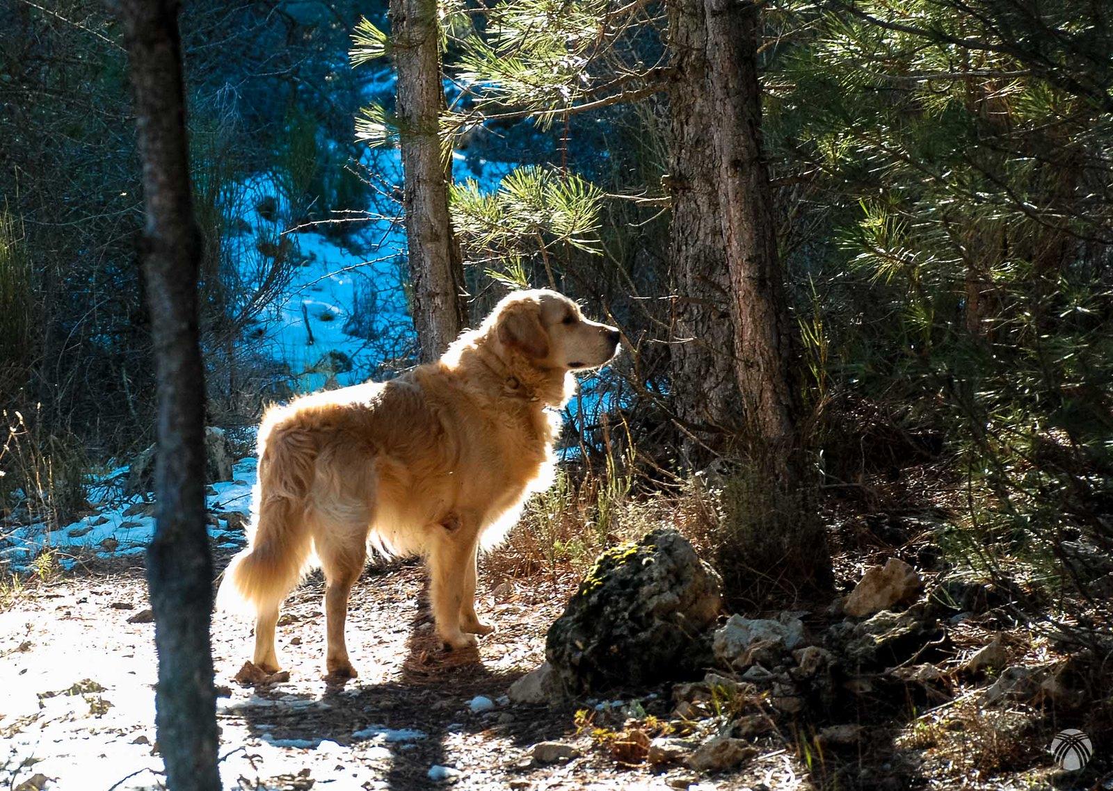 Moss atento en el bosque