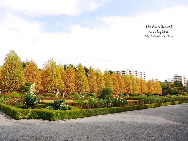 日本東京自由行新宿御苑庭園景點 (9)