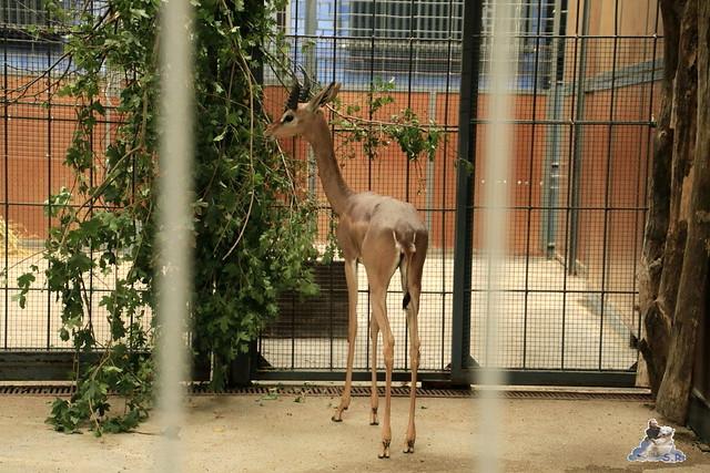 Zoo Berlin 14.08.2015  071