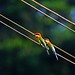 Colourful Twins on the Parallel Lines... by Selva Rangam