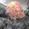 #junk #art #artistic #artsy #beautiful #beautifulphoto #beautifulpicture #coloursplash #photography #photoedit #photoeffects #photomanipulation #stills #stilllife #surreal by AirportGirl3