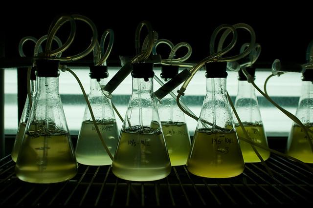 ! litre phytoplankton flasks