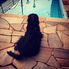 Minha guarda :dog::paw_prints::paw_prints::thumbsup: #viralata #cachorro #dog #serranegra #saopaulo
