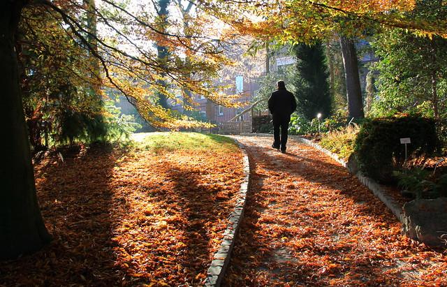 Herfst in de Leuvense Kruidtuin