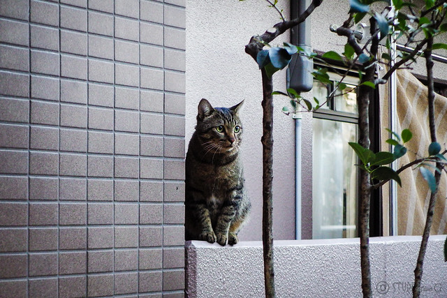 Today's Cat@2015-10-29