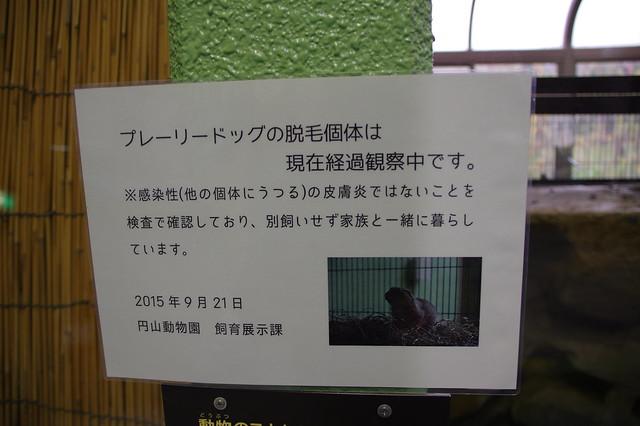 20151031円山動物園_15