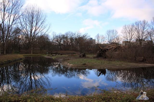 Tierpark Berlin 22.11.2015   0119