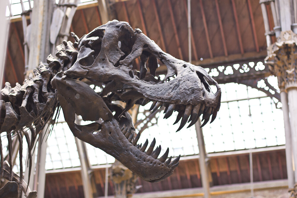 oxford university museum of natural history, dodo, skeleton, tortoise, camel, laila
