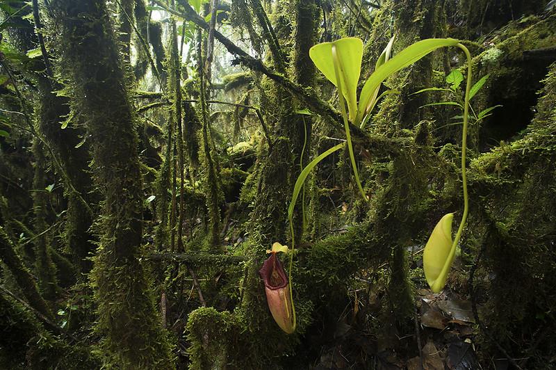Carnivores et orchidées in situ  23037569696_35d59591ba_c
