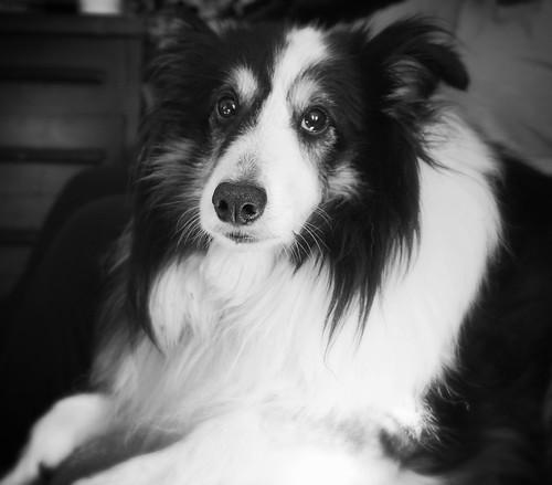 Jake (Mom's dog)